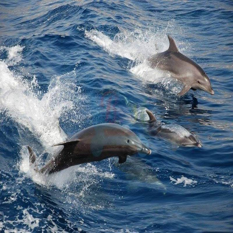 Dolphins Cruise