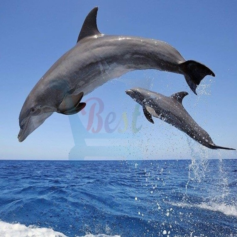 Dolphin_view