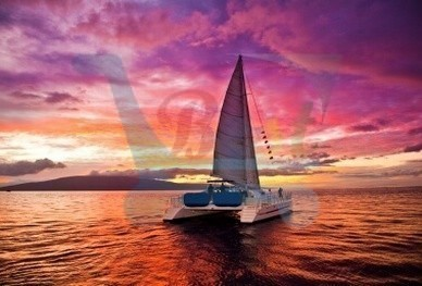 cat_Sunset