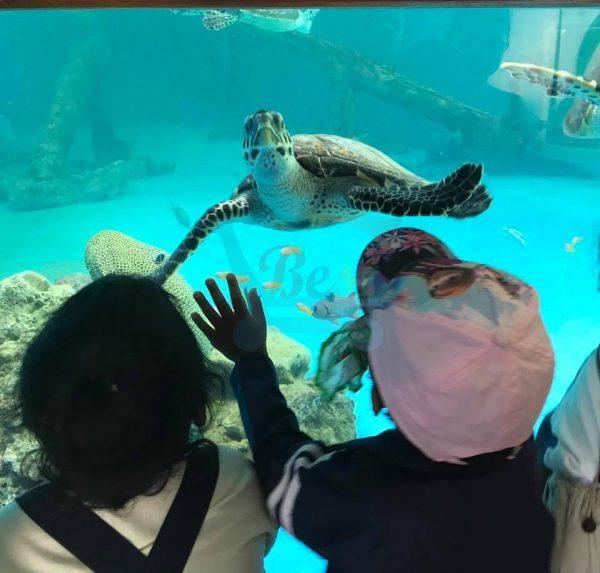 Mauritius Aquarium